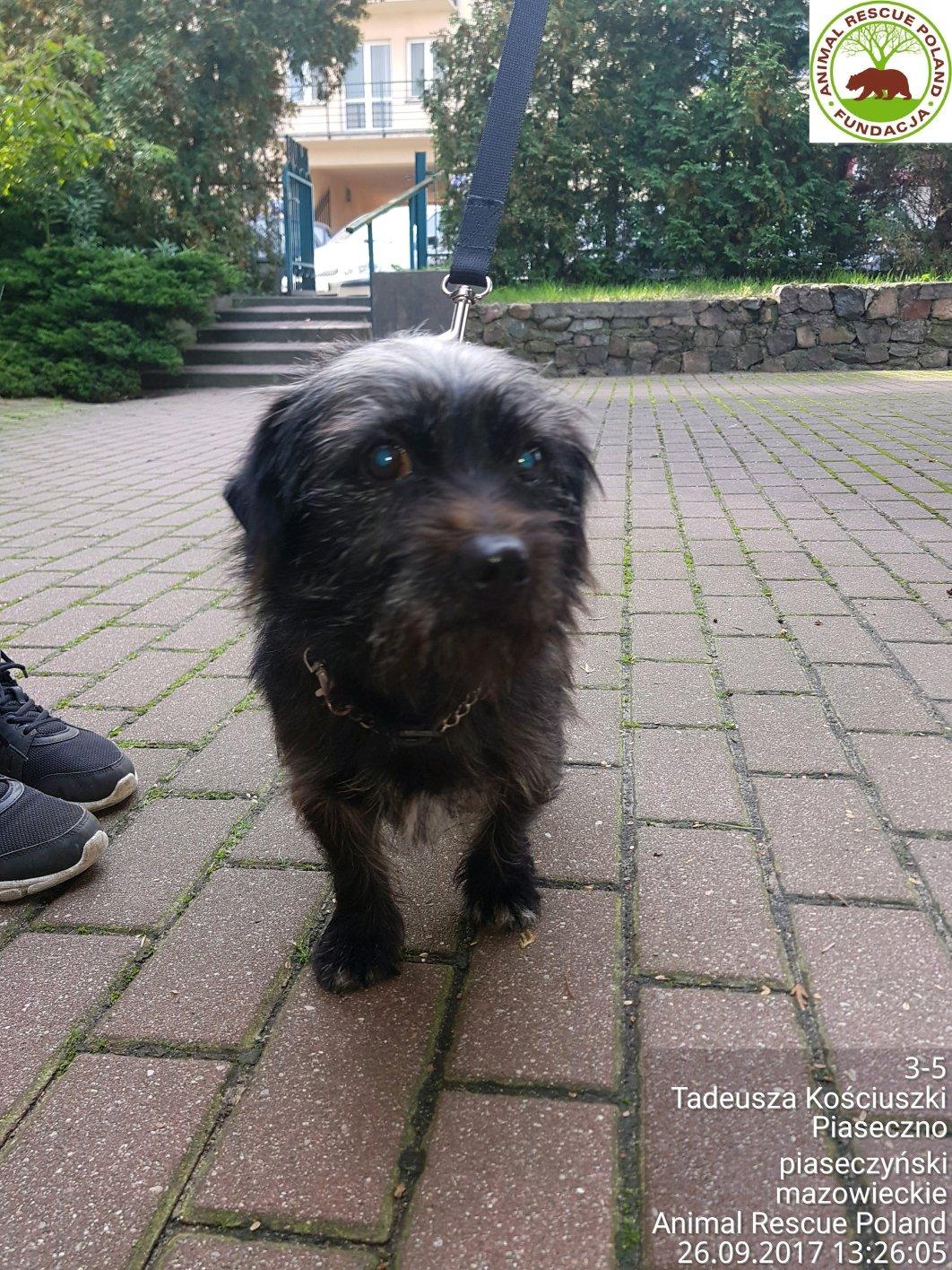 Znaleziono psa koło Domu Kultury w Piasecznie