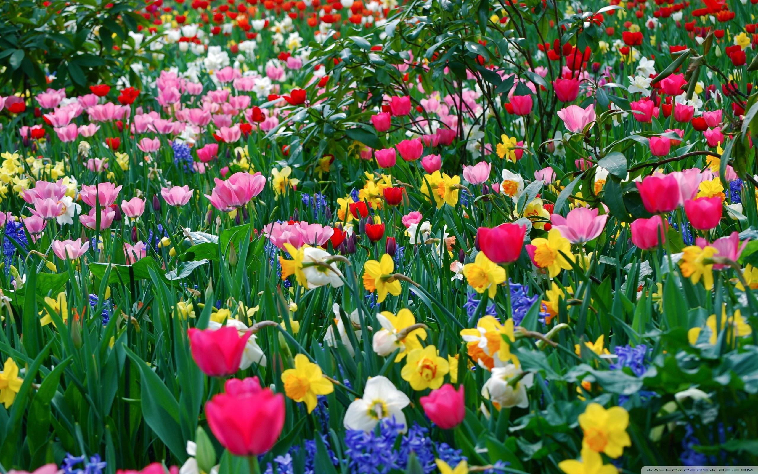 Kwiecień to czas zmian – piaseczyńska rewolucja